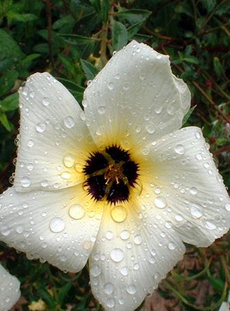 Floral Chanana Florais Filhas de Gaia