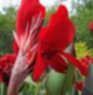 Floral Caté Vermelho Filhas de Gaia