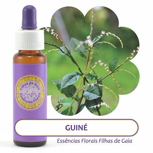 Guiné - Essência Floral