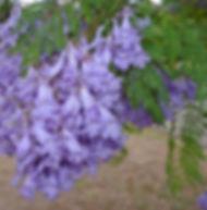 Floral Jacarandá Filhas de Gaia