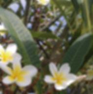 Floral Jasmim Manga Filhas de Gaia