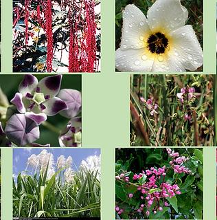Composto Floral Sorriso