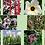 Thumbnail: Sorriso - Composto Floral