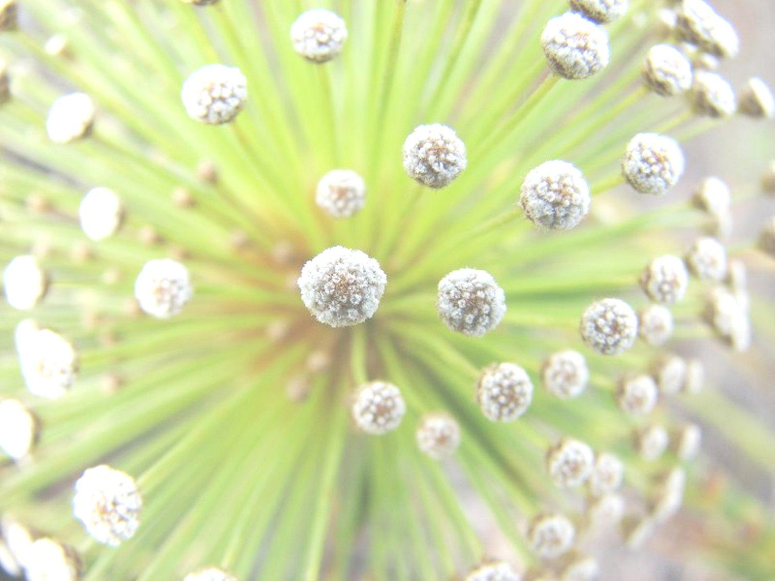 Floral Chuveirinho Florais Filhas de Gaia