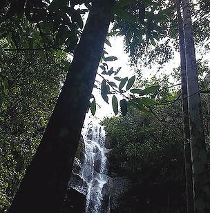 Floral Cachoeira da Entrega Filhas de Gaia