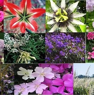 Composto Floral Comaixão