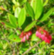 Floral Camarinha Filhas de Gaia