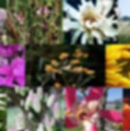 Composto Floral Chamego