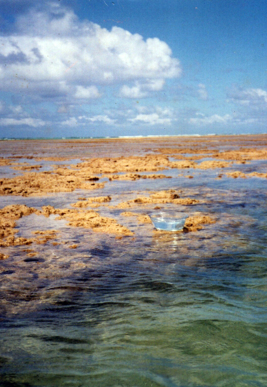 Floral Mãe d'água Florais Filhas de Gaia
