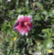 Floral Hibisco Lilás e Vermelh Filhas de Gaia