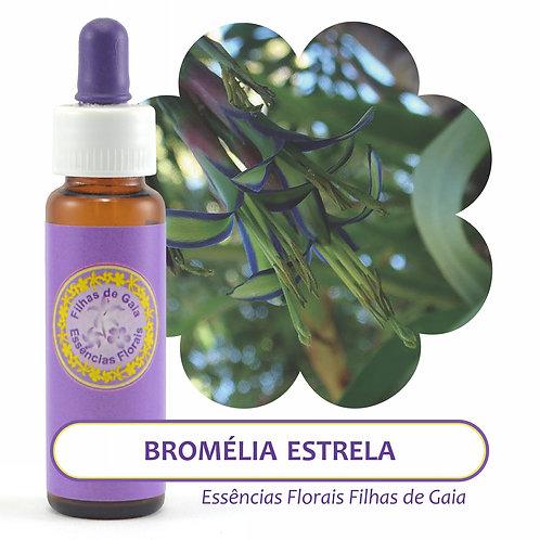 Bromélia Estrela - Essência Floral