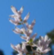 Floral Falsa Mirra Filhas de Gaia