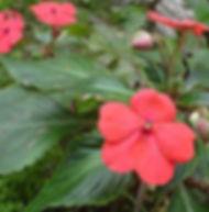 Floral Beijinho Filhas de Gaia