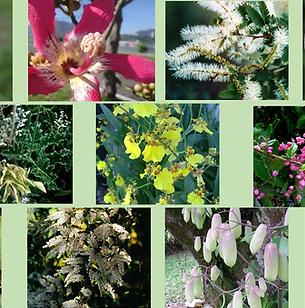 Composto Floral Manto de Luz