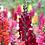 Thumbnail: Boca de Leão - Essência Floral