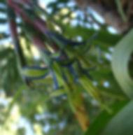 Floral Bromélia Estrela Filhas de Gaia