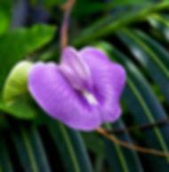 Floral Roxo Filhas de Gaia
