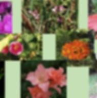 Composto Floral Desabrochar