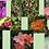 Thumbnail: Desabrochar - Composto Floral