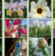 Composto Floral Rendição
