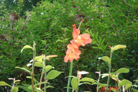 Floral Palma Laranja Florais Filhas de Gaia