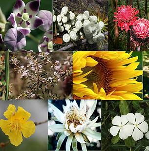 Composto Floral Emergencial