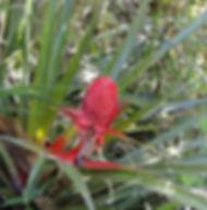 Floral Gravatá Filhas de Gaia