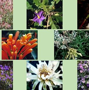 Composto Floral Novos Caminhos