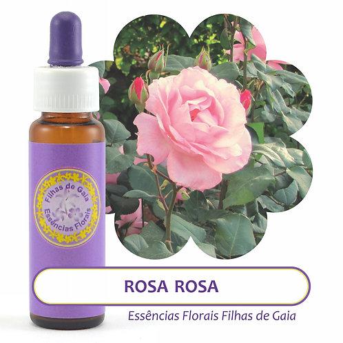 Rosa Rosa - Essência Floral