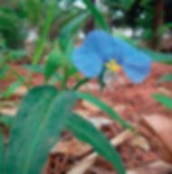 Floral Capim de Sta. Luzia Filhas de Gaia