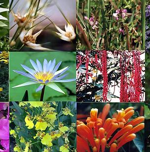 Composto Floral Desapego