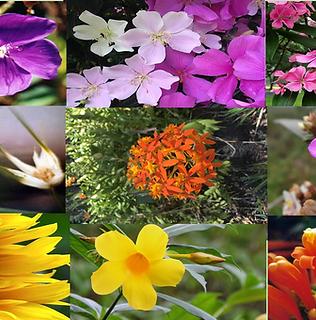 Composto Floral Colméia