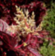 Floral Coração de Mãe Filhas de Gaia