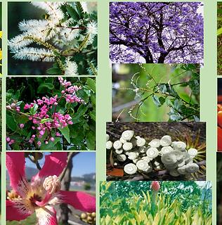 Composto Floral Unicórnio