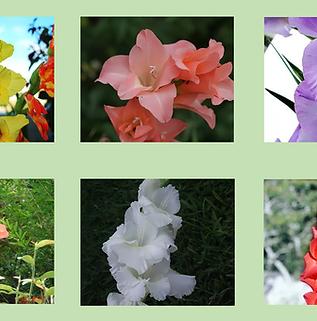 Composto Floral Renascer em Palmas