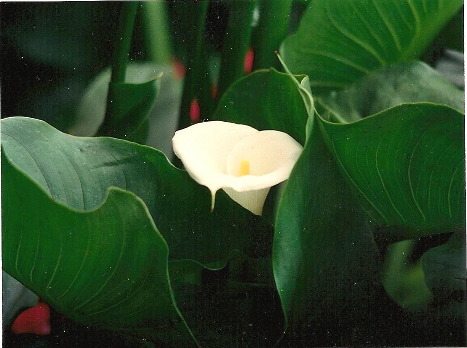 Floral Copo de Leite Florais Filhas de Gaia