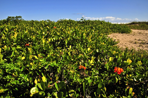 Floral Orquidea do Cardoso Florais Filhas de Gaia