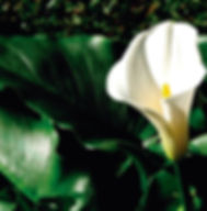 Floral Copo de Leite Filhas de Gaia