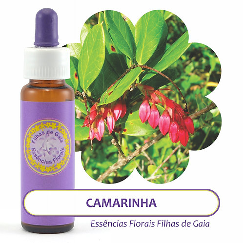 Camarinha - Essência Floral