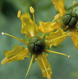 Floral Arruda Filhas de Gaia