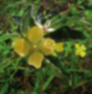 Floral Cruz de Malta Filhas de Gaia