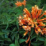 Floral Cipó de São João Filhas de Gaia