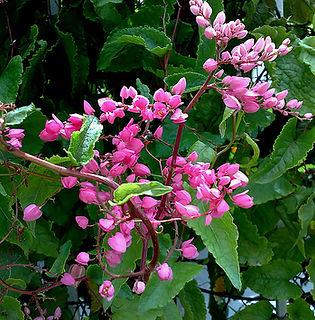 Floral Alegria Filhas de Gaia