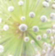 Floral Chuveirinho Filhas de Gaia