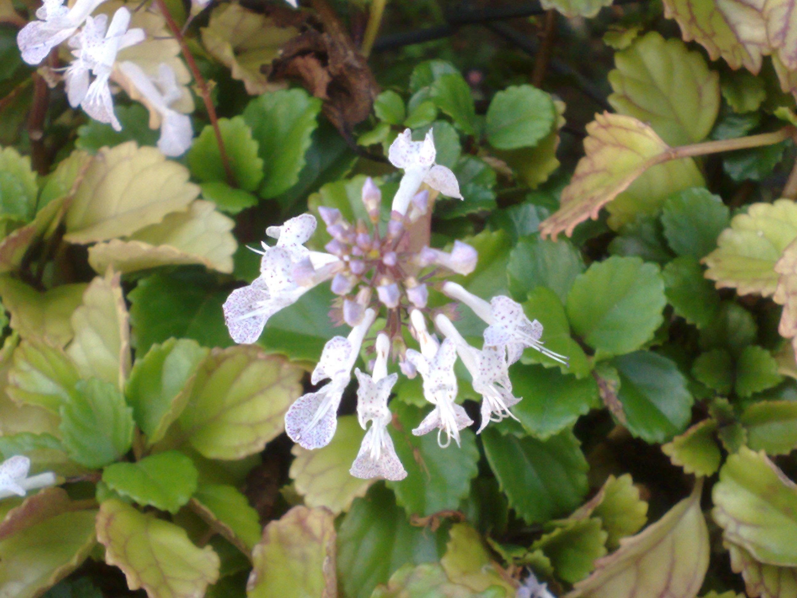 Floral Dinheiro em Penca Florais Filhas de Gaia