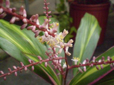 Floral Ti Florais Filhas de Gaia