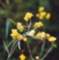 Floral Macelinha Filhas de Gaia