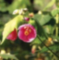Floral Lanterna do Coração Filhas de Gaia