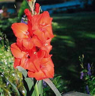 Floral Palma Vermelho Filhas de Gaia
