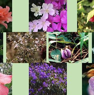 Composto Floral Laços de Amor